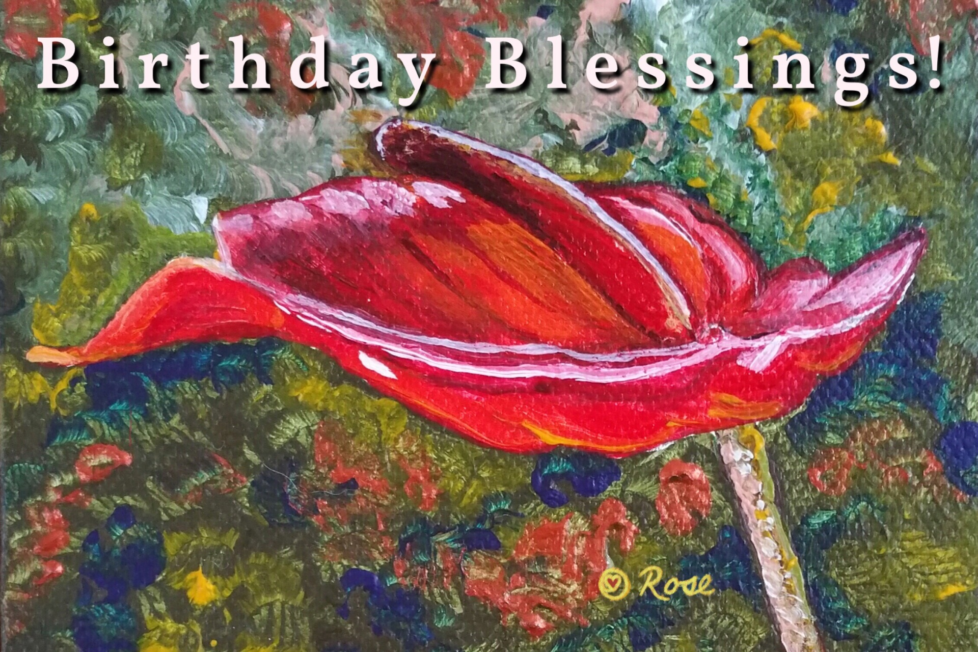 Birthday Anthurium 1